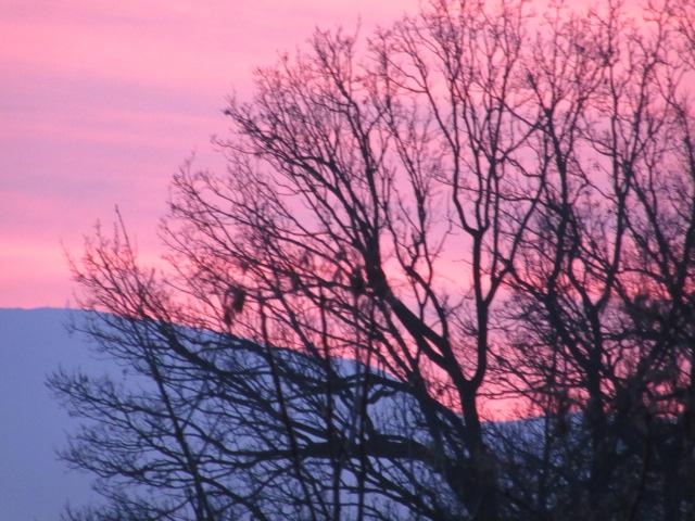 tramonto con cielo rosa e albero spoglio
